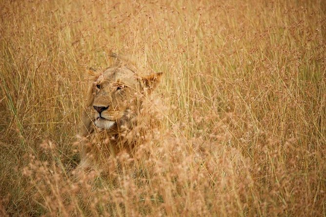 2 Days Big 5 & Big cats in Akagera National Park photo 11