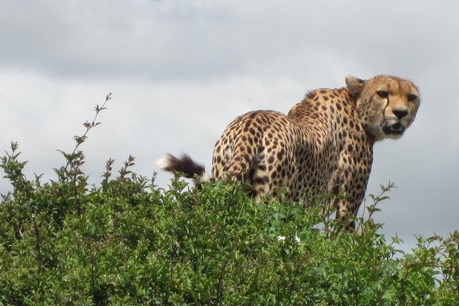 7 - Days Fascinating Tanzania Safari