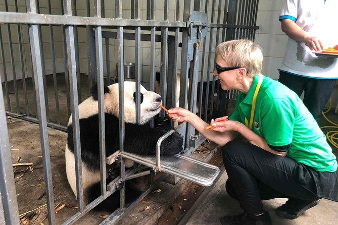 Increíble viaje de panda gigante en Chengdu