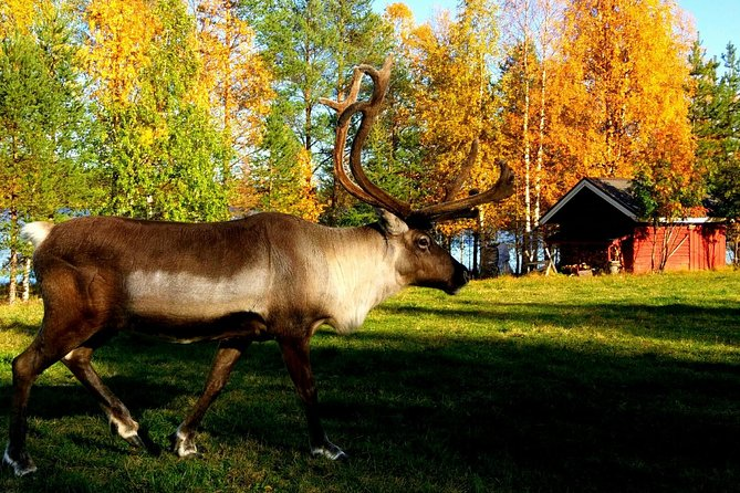 A Cultural Encounter At A Local Reindeer Farm