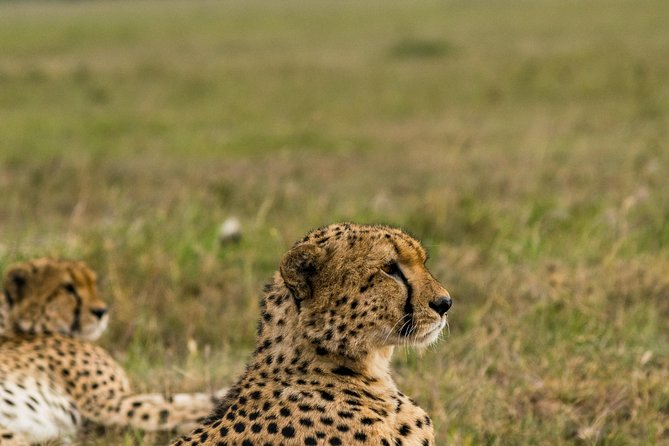 7 Days Amboseli National park and Maasai Mara Safari