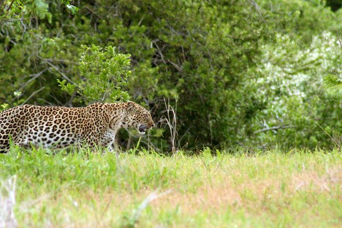 1 Day Ruaha National Park