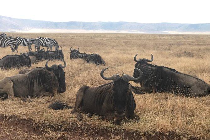 3 Days Wildlife Safari (serengeti & Ngorongoro )