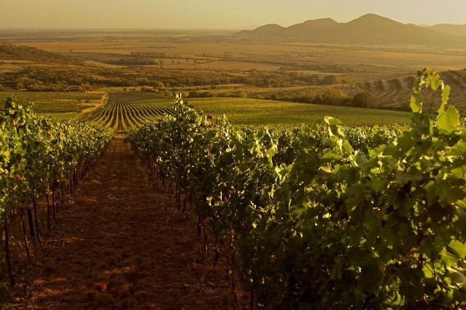 Grand Wine Tasting Tour of Gyongyos, Eger and Tokaj
