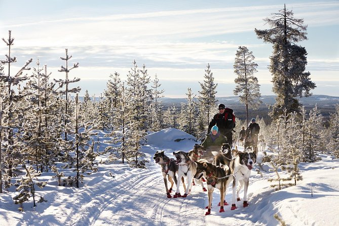 Become A Husky Musher (driver)