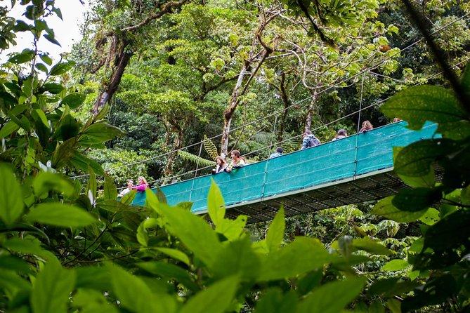 Sky Adventures Park Treetop Walk On Hanging Bridge + Trails @ Monteverde