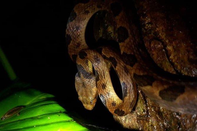 Night Walk-Observation of nocturnal wildlife