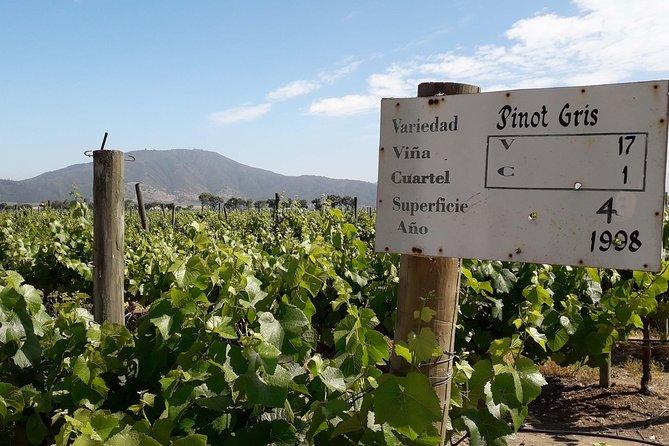 Casablanca Valley Wine Innovation Tour: Emiliana and Bodegas RE Vineyards