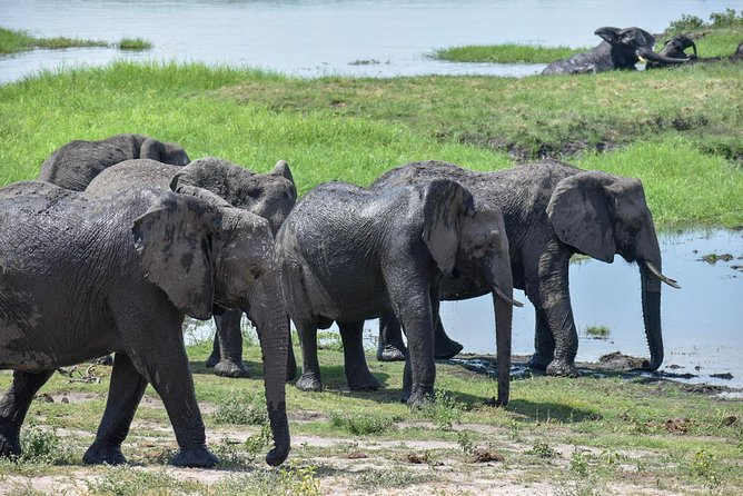 Chobe Safari Day Trip photo 4