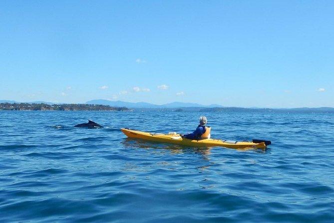 Whale Watching Kajak Tour von Batemans Bay
