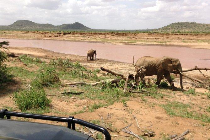 5-Days Refreshing Safari at Masai mara, Lake Nakuru and Naivasha.