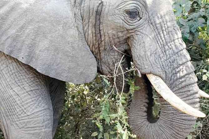 5DaysTarangire, Manyara, Ngorongoro crater safari