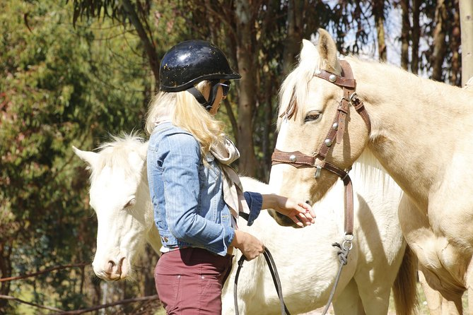 Horse Riding 4 Archaeological Sites