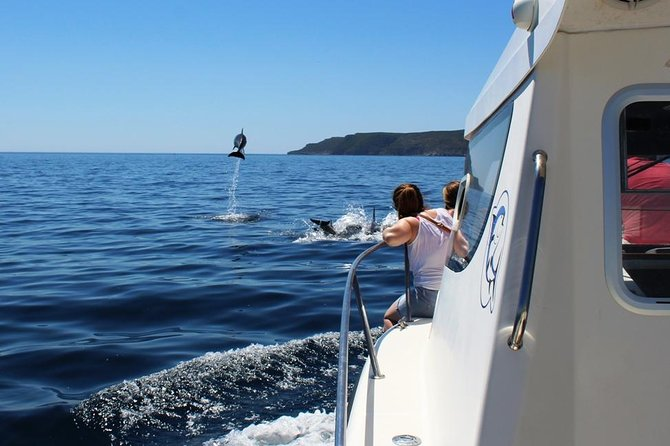 Dolphin Watching Boat Trip With Boarding In Sesimbra