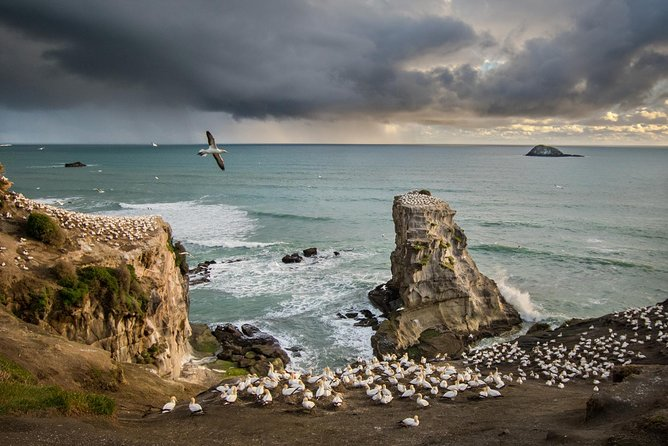 Muriwai - Forest, Water and Bird Lovers Private