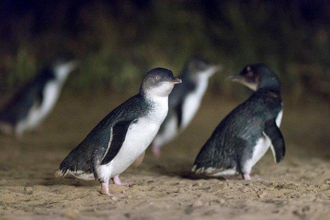 Private Tour: Phillip Island, Penguin Parade and Moonlit Sanctuary Conservation Park from Melbourne