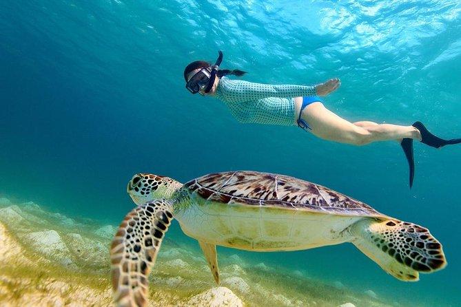 Gili Islands Snorkeling Tour