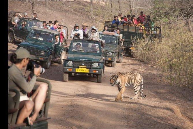 Ranthambhore Excursion