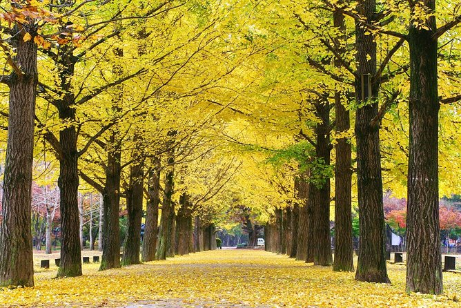 2 Day Essential Tour-Nami Island,Petite Fr. and Mt.Seorak(Inc. Accom. & 4 Meals) photo 20