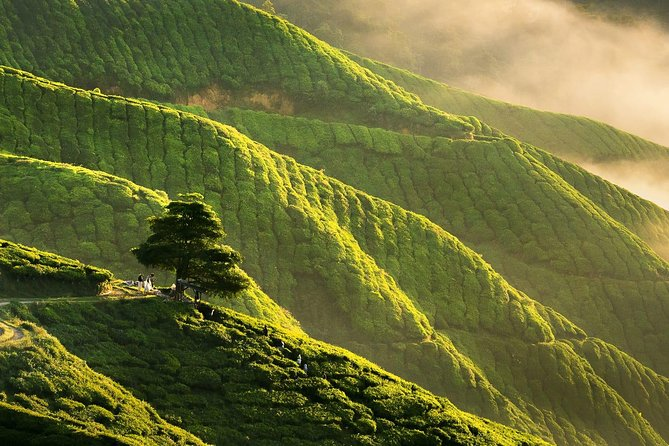Full-day Cameron Highlands Day Trip from Kuala Lumpur