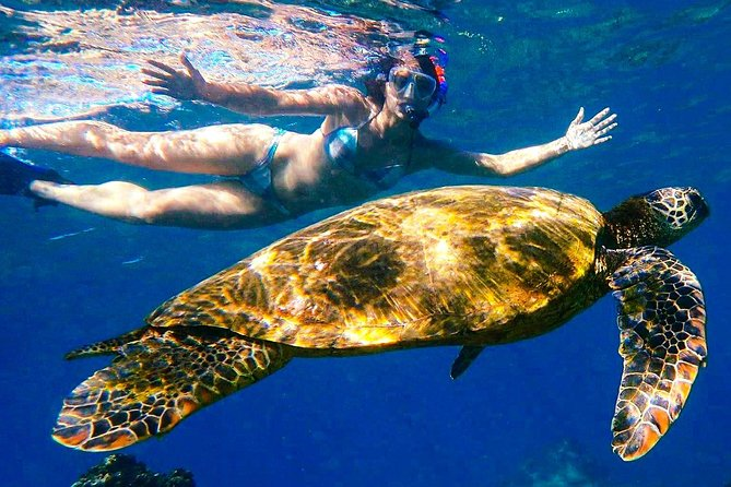 Turtle Town Kayak & Snorkel Group Tour (7am-10am)