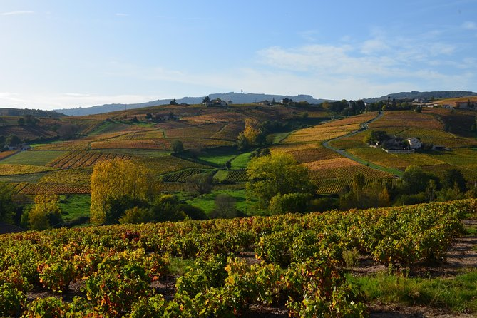 Vineyard Tour with Wine and Charcuterie Tasting Magnum Formula