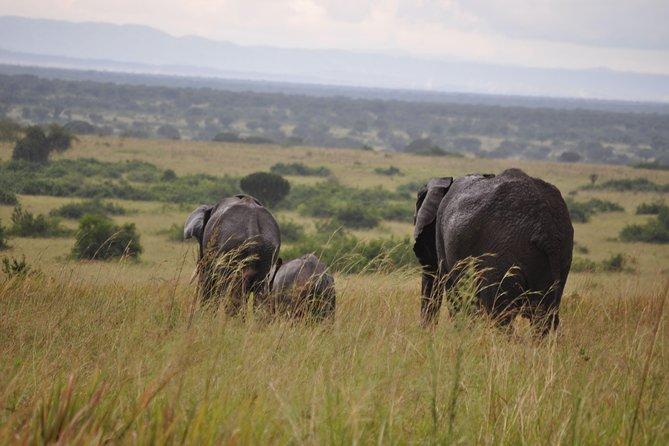 The 3 day Murchison Falls National Park safari andTour