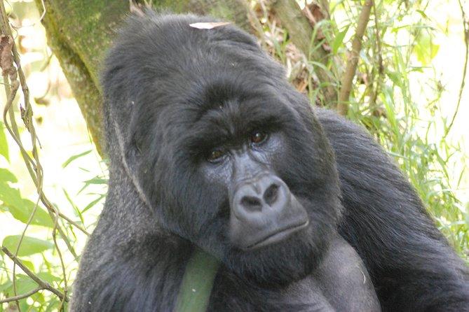 4 Days Batwa Trail & Gorilla Trekking Safari
