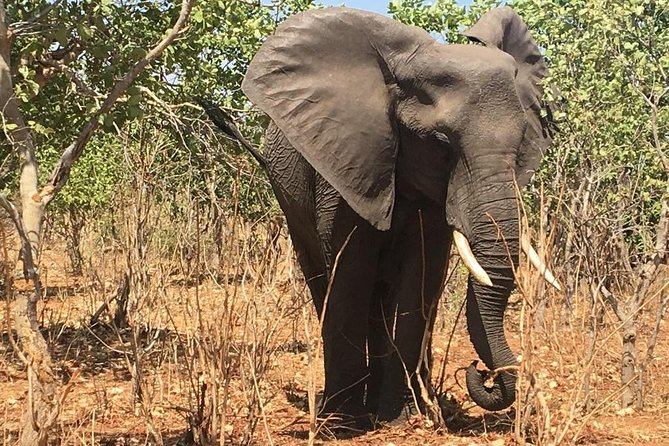 Victoria Falls-Hwange National Park Trip