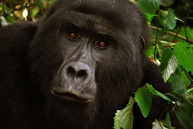 5 Days Gorilla Tracking and Wildlife Safari
