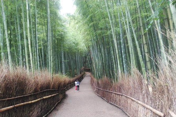 Kyoto Splendid Nature, Castle & Garden Exploring Tour