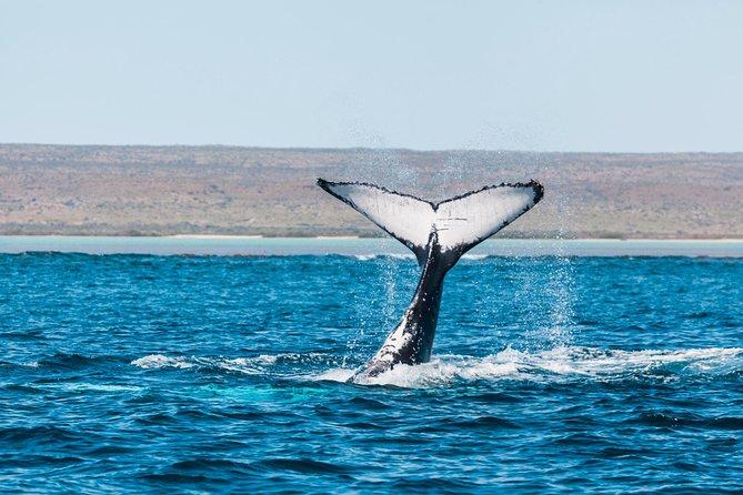 Ningaloo Reef Eco Tours