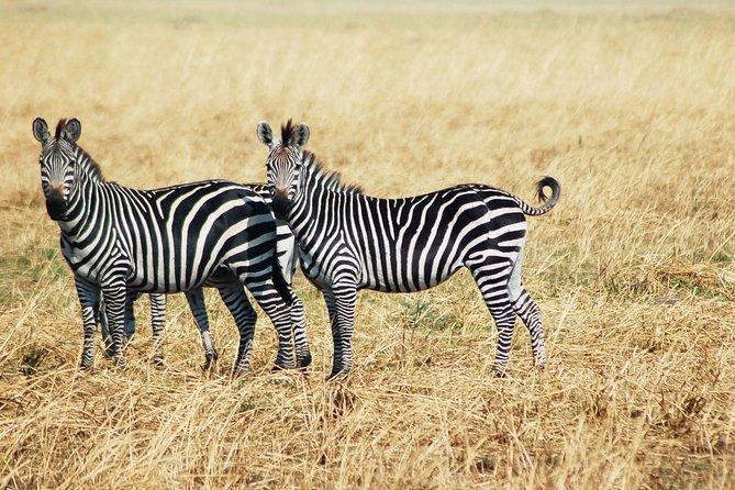 3-Days 2 Night Amazing Amboseli Experience.