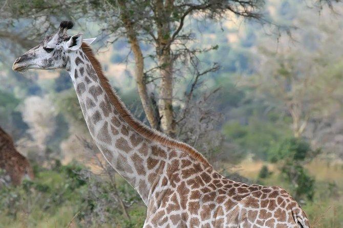 12-Day Kenya-Tanzania Experience Safari