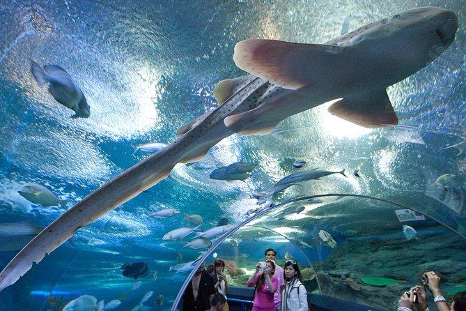 Underwater World at Pattaya Admission Ticket