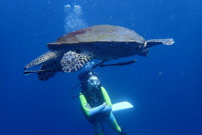 Koh Tao 2-Dive Day Trip from Koh Samui