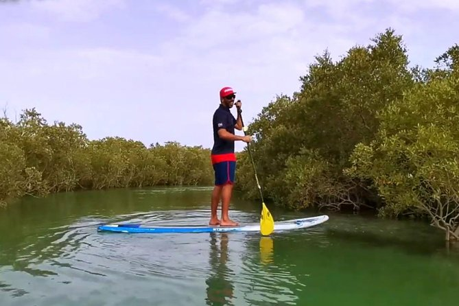 Abu Dhabi Mangroves Stand-Up Paddle Board Guided Tour photo 7