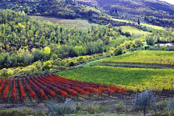 Castle Wine tasting Tour and lunch in the country close Florence with transfert