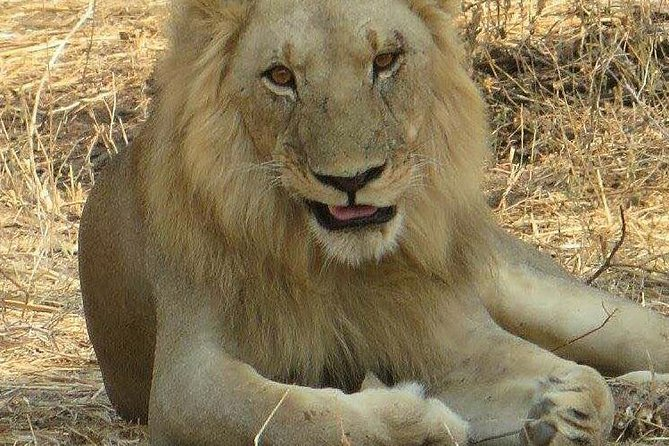 4 days to Tarangire National park and Lake Manyara National park - Tanzania