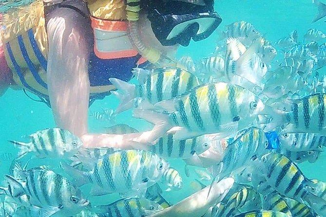 Snorkeling Tour In Gili Nanggu