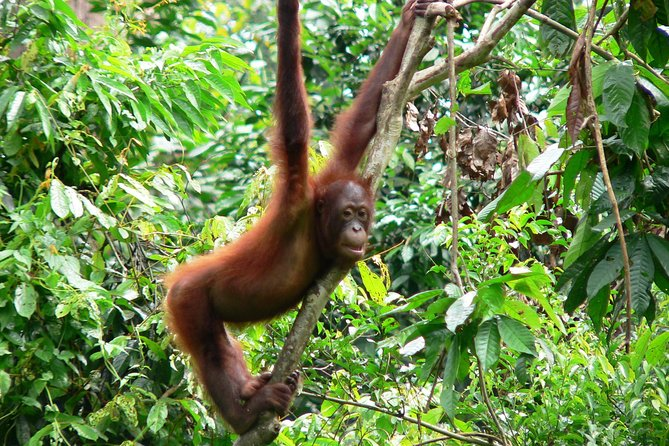 Singapore and Sabah, Borneo Private Tour