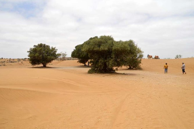 Agadir Top Road 4x4 Jeep safari Desert Adventures including lunch ® photo 3