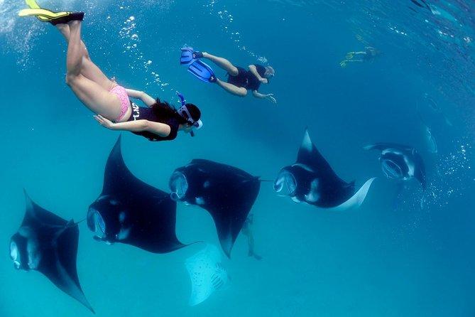 Snorkeling Safari and Penida Island Tour