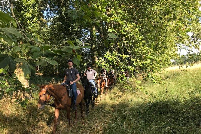 Horse and pony ride