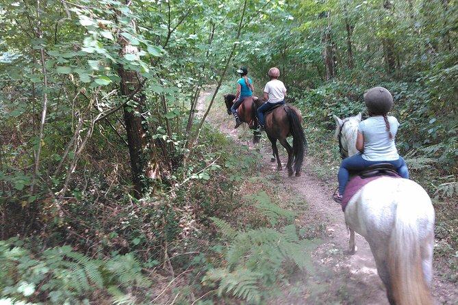 Half H pony / horse / family