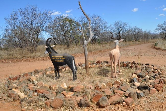 8 days the best of Southern circuits tours ( Selous, Mikumi and Ruaha )
