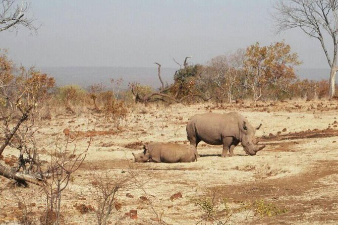 Long Rhino walk photo 32