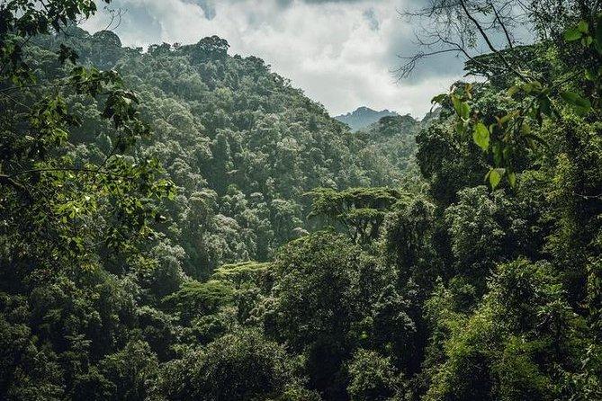 3 Days Gorilla Trekking & Relax at Lake Bunyonyi