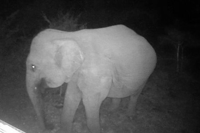 Night Drive in Yala National Park Buffer-Zone photo 6