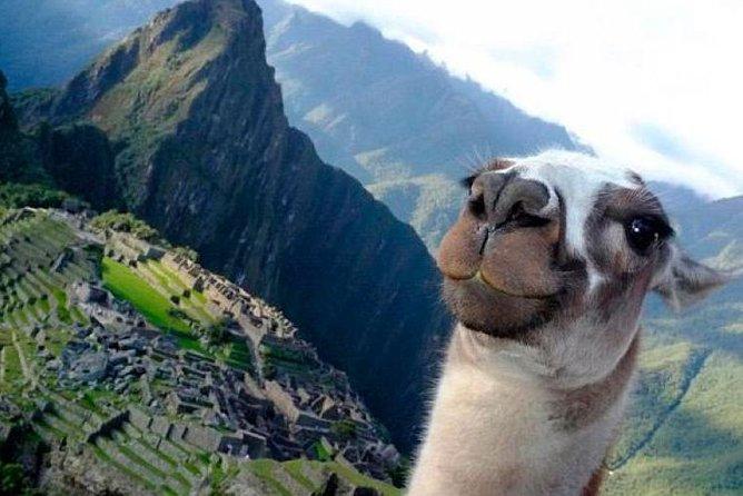 Explore Machu Picchu in 1-Day By Train